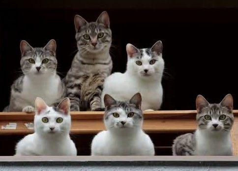 見えるぞ!私にも猫が見える!!