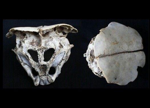 ブルガリアで見つかった宇宙人の頭蓋骨が河童すぎる件