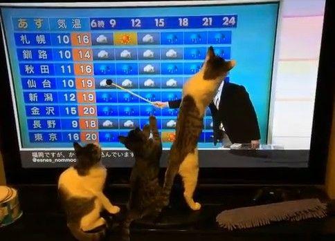 ネコと天気予報