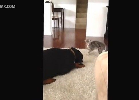 犬の優しさと猫の可愛さがわかる動画