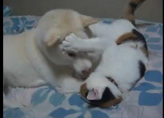 犬と猫のプロレス。 死闘編。