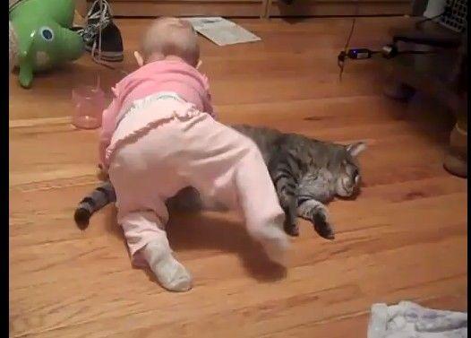 赤ちゃんは仲良くしようとしてるけど猫がキレてる件について