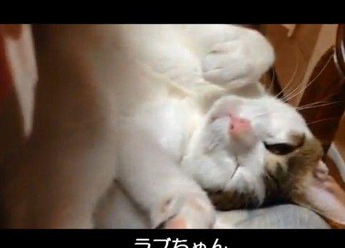 主の呼びかけを拒否し寝る猫