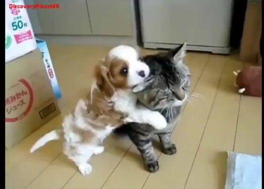 【甘噛み】スリスリしてくる子犬に我が身をゆだねる猫【恍惚】