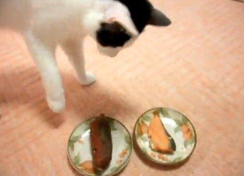 焼き魚より焼き芋が気になる猫