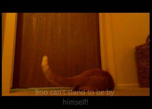 【じわじわくる】早朝5時にビロロロロローンと起こしにくる猫