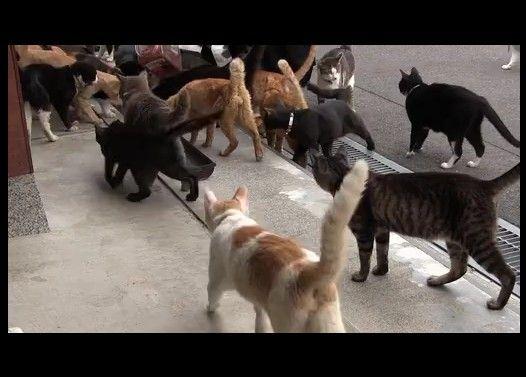 猫好き巡礼の旅【御誕生寺・通称ぬ・・・猫寺】