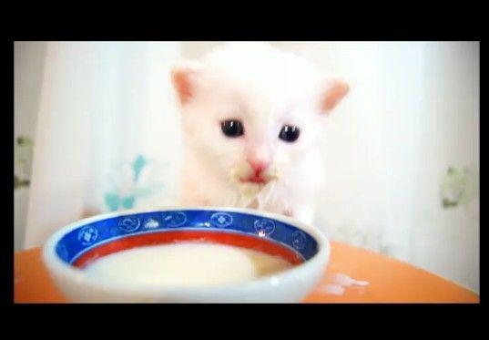 子猫のミルクの豪快な飲みっぷりが可愛すぎる