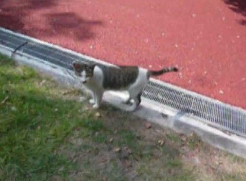 野良の子猫と遊ぼうと思ったら母猫が本気になった