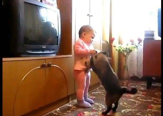 子猫を必死で取り返そうとする親猫