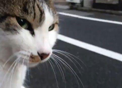 最強に人懐こい野良猫を膝に乗せてみた
