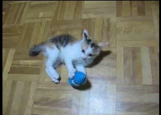 子猫のシャドウボクシング。必死ですが、技は多彩です。