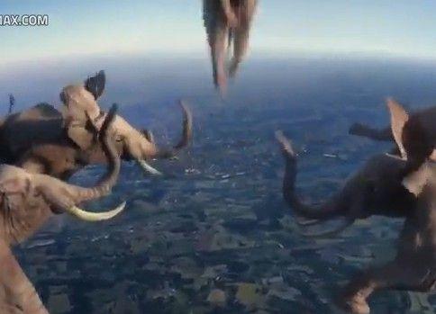 動物たちの超絶な技集