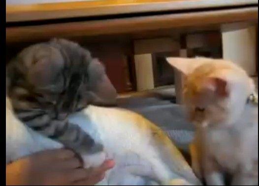 いつのまにかマジ喧嘩になる猫たち