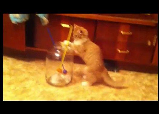 猫 「やばい! ガラス瓶から出られなくなった!!助けて!!」