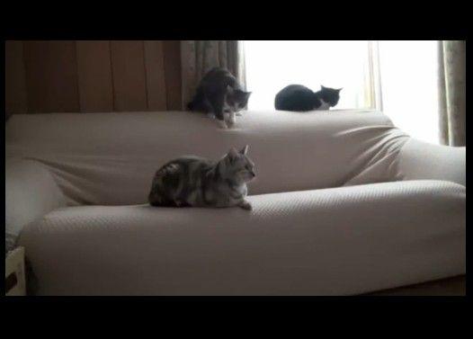 仲間の猫にキックしてドボン