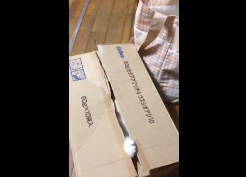 箱を全力で閉めようとする猫にゃん