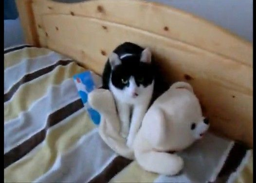 ファーファが好きすぎて揉みほぐす猫