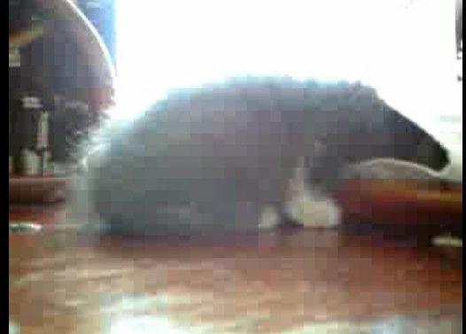子猫が袖に顔つっこんだまま寝てしまった
