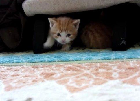 子猫産まれたて(生後25日経ちました)