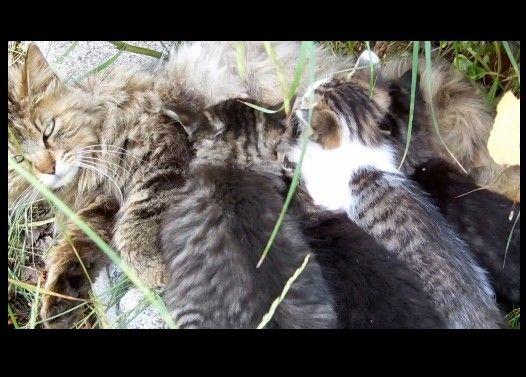 猫ママの崖っぷち授乳大百科