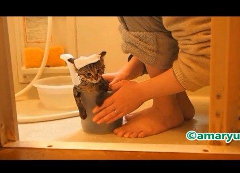 いい湯だな〜子猫はじめてのお風呂〜
