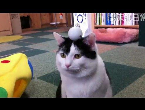 猫が集中力を養う修行をしている