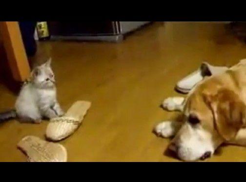 子猫のありえない行動に目が点になった犬
