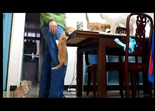 ご飯タイムに足を登る子猫がかわゆい