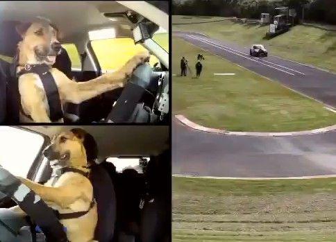 犬用自動車教習所
