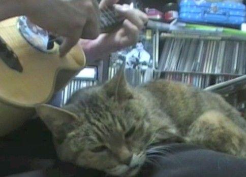 演奏ミスると機嫌が悪くなるネコ