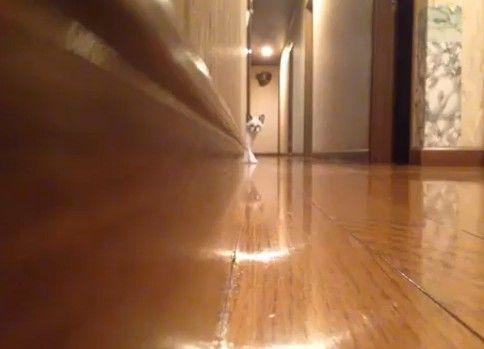 変な歩き方をするネコ