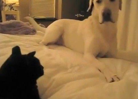 犬「ここは私のベットです」 猫「いえ、違います」