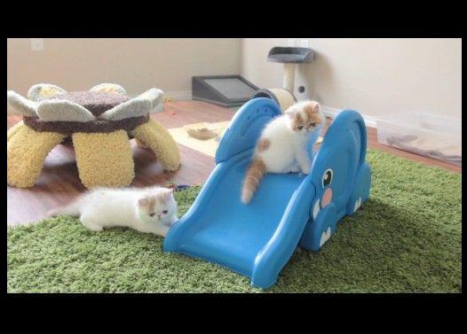 ゾウさんすべり台で遊ぶ子猫達