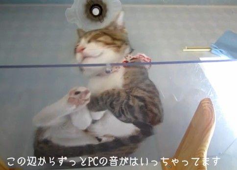 猫の裏っかわ