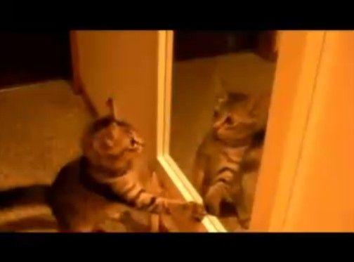鏡に立ち向かうものの結局「?」なねこ