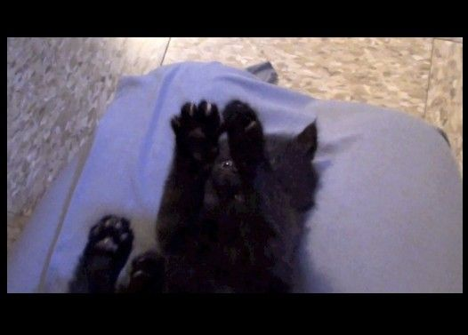 黒猫の赤ちゃんがいないいないばーする様子がかわいい