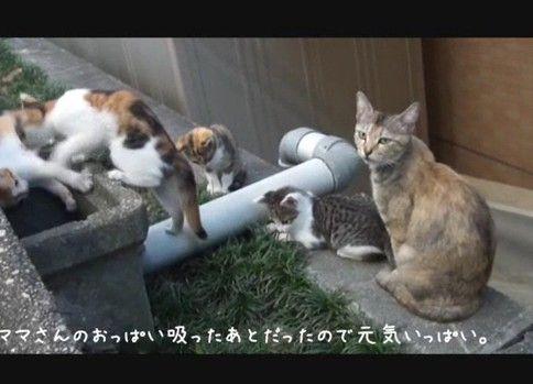 野良ネコさんの赤ちゃんが謎の遊びを繰り広げている
