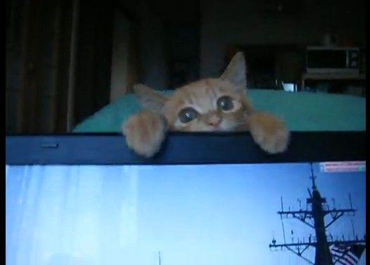 フェイントする猫