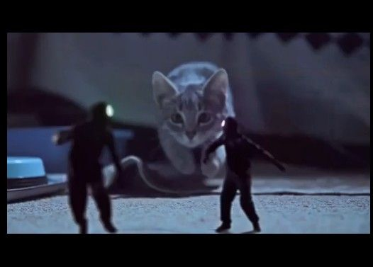 小さな侵入者をやっつける子猫