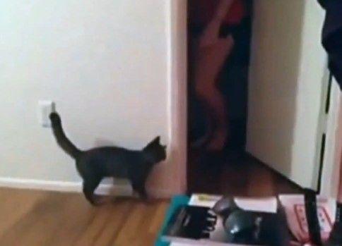 すんごい勢いで怯える子猫wwww
