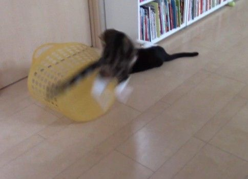 【狩りの練習】かごの裏から何度も襲いかかる猫