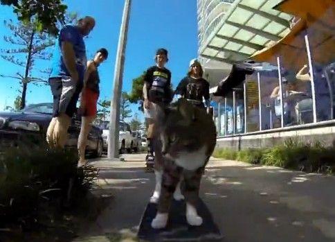 街をスケボーに乗って冒険する猫