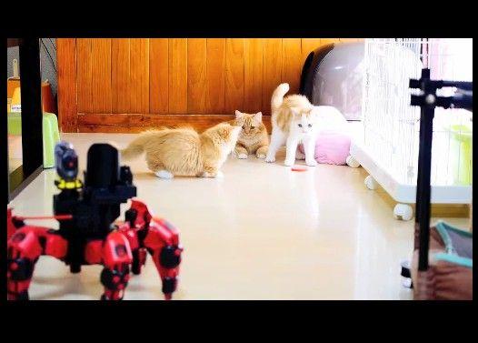 【マンチカン3兄妹】マンチカン親子VS六足歩行ロボット