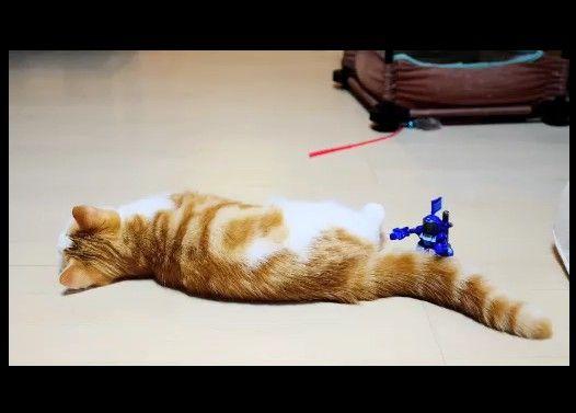 【マンチカン3兄妹】子猫VS格闘ロボ