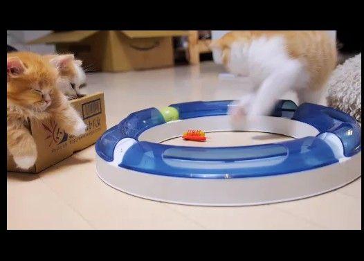 子猫のキャッチボール