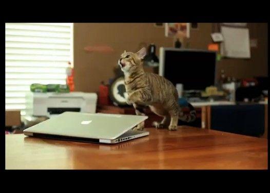 フォースを操る子ネコ