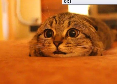 猫ミサイル