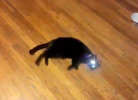 バンッって撃たれると死んだふりする猫が可愛い