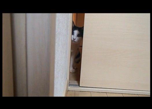 入りたくても、入れない白黒いヤツ(猫)